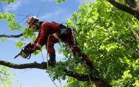 Tree Surgeon Goffs Oak London